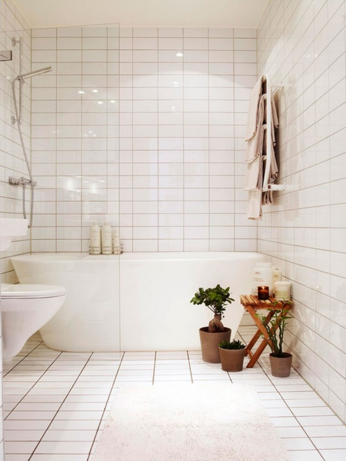 Rośliny W łazience Kokopelia Design Kokopelia Design