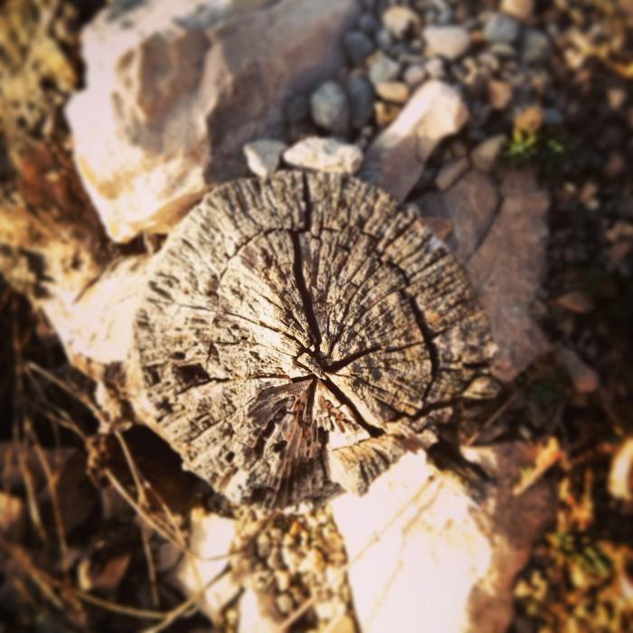 skaczacy_przez_lawende_prowansja_kokopelia_ (12)