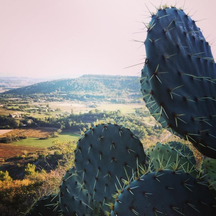skaczacy_przez_lawende_prowansja_kokopelia_ (4)